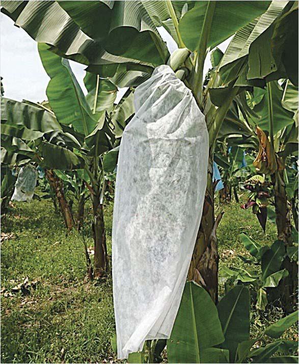 Saquinhos de tnt para proteger frutas